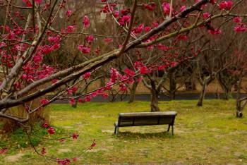 民族公園梅林