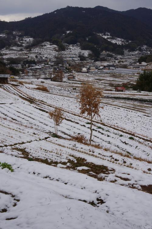 明日香 稲淵 雪景色