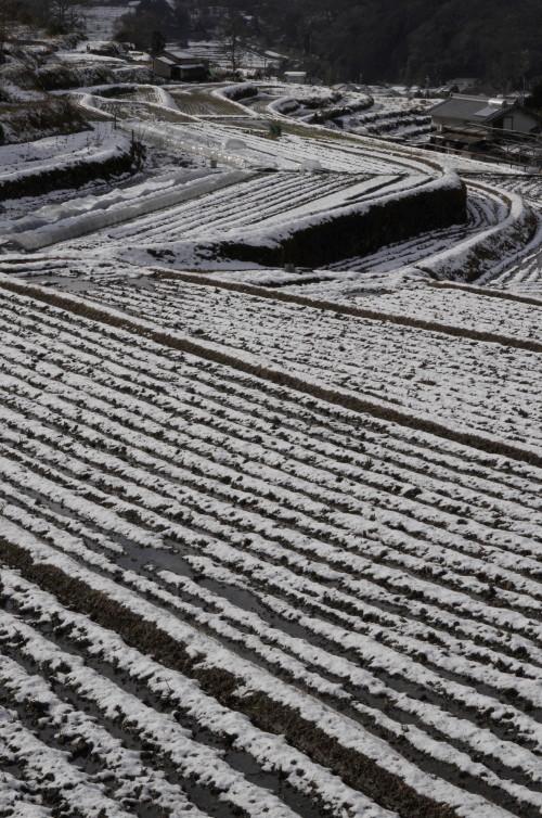 明日香 棚田の雪模様_1