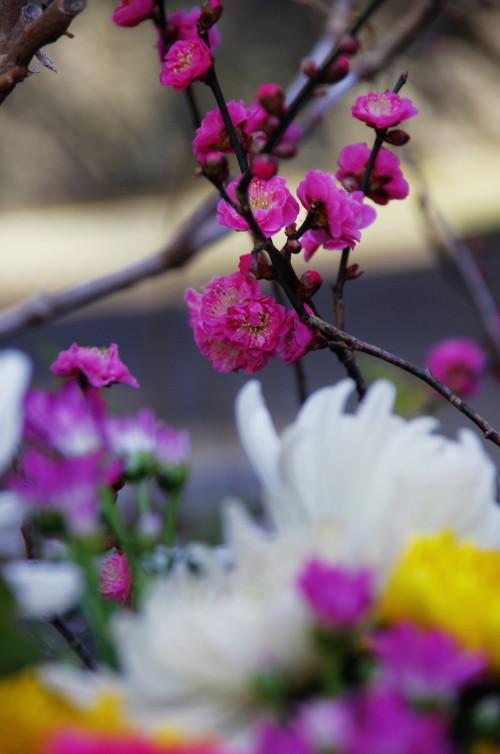 二月堂 梅の花