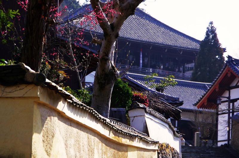 二月堂 土塀の梅