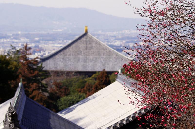 二月堂 梅の花と大仏殿甍