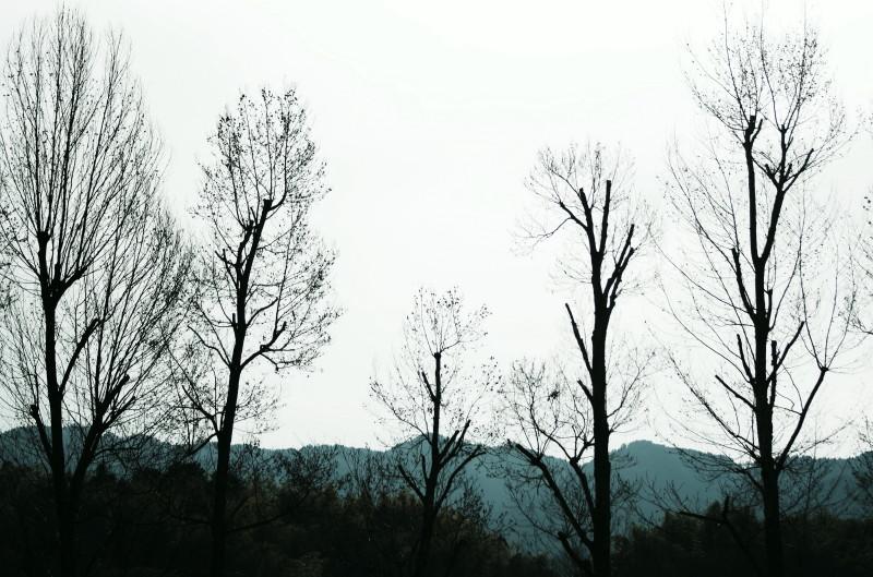 飛鳥 木立