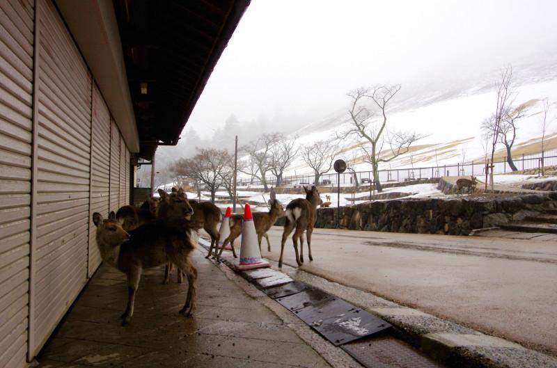 雪の奈良公園 若草山