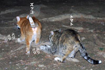 2010-01-31-2.jpg