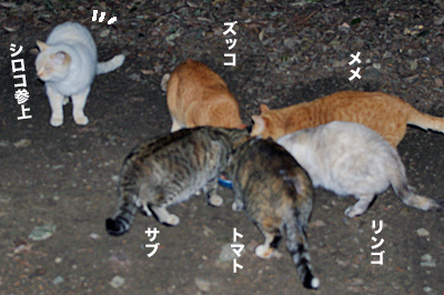 2010-01-31-3.jpg