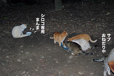 2010-01-31-4.jpg
