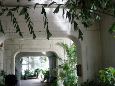 熱帯鳥温室201108