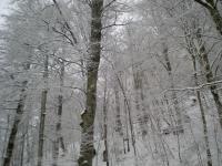 ノイシュバンシュタイン城までの雪景色