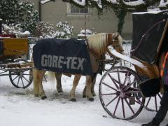 ゴアテックスと馬