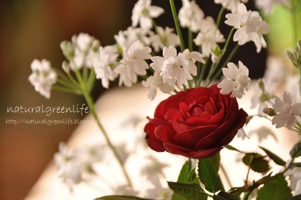 ミニ薔薇 カルメン