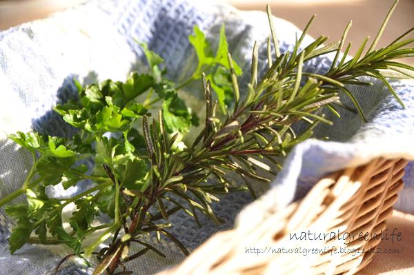 庭のハーブ ローズマリーとイタリアンパセリ