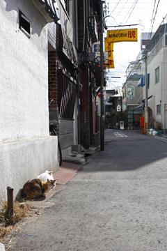 漁港街のネコ