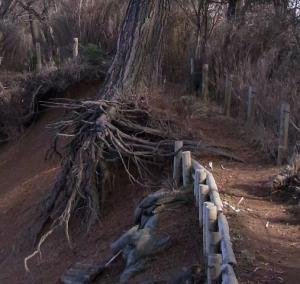 根が・・・ クリックで拡大