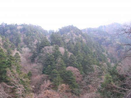 モミの原生林