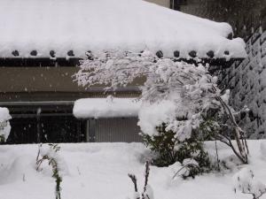 雪だ~! クリックで拡大