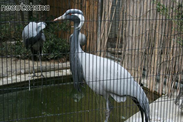 IMG_3925鳥1
