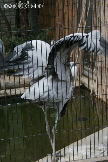 IMG_3926鳥2