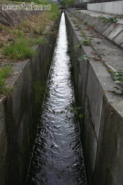IMG_4753水路