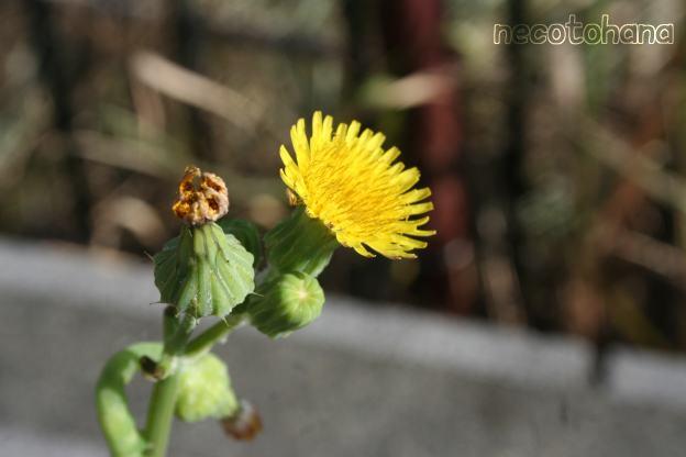 IMG_6033黄色1
