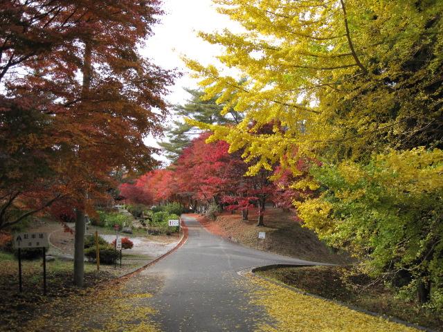 2010弥高山公園