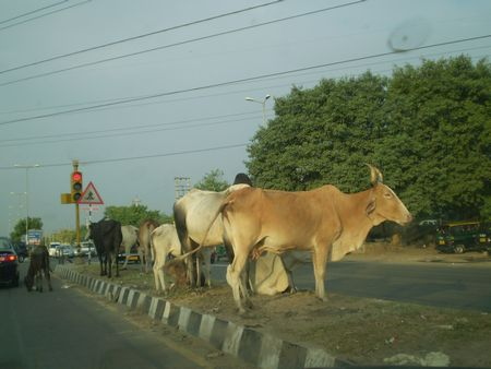 cow-nelsonmandela.jpg