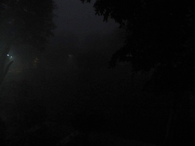 foggymorning231211.jpg