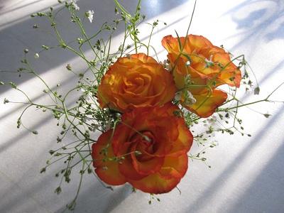 rose130112.jpg