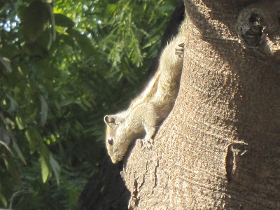 squirrel040313.jpg