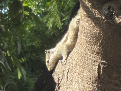 squirrel040313.jpg