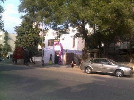 street-elephant1.jpg