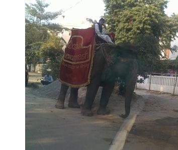 street-elephant2.jpg