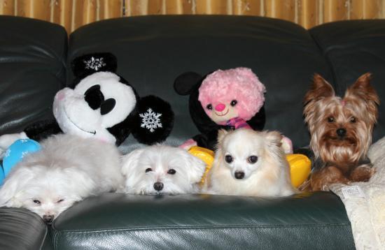 我が家の犬達1