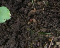 団粒化した土