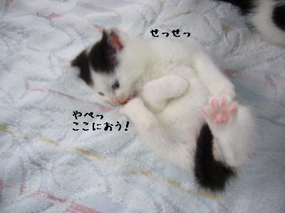 ヅラっち-3