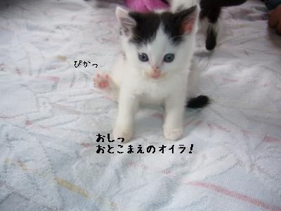 ヅラっち-4