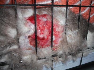 虐待被害猫20110216