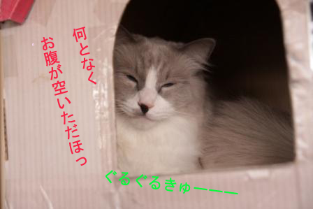 雪之丞20110323