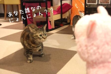 いちご20110328