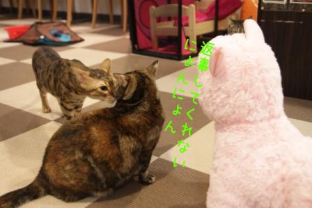 いちご20110328-3