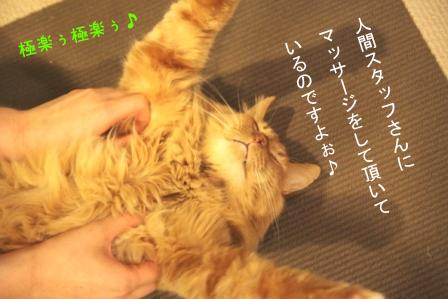 もっさん20110408-3