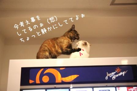 しらたま20110430-4