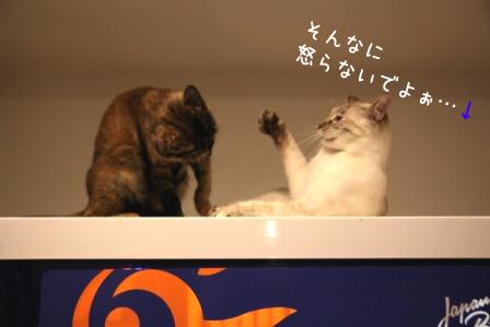 しらたま20110430-5