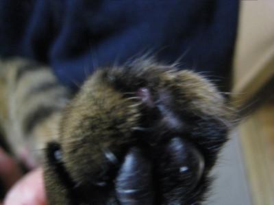 h23,3爪をはがしたちいた