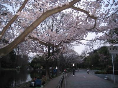 h23,4,10桜