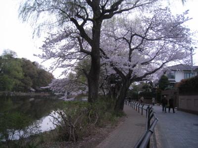 h23,4,10桜2