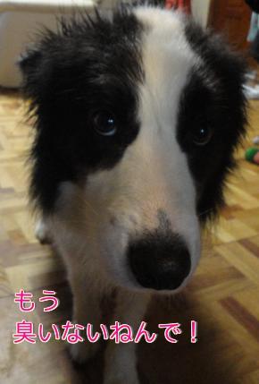 2q_20110606193533.jpg