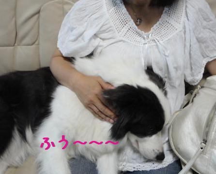 XAWRg_20110825221141.jpg