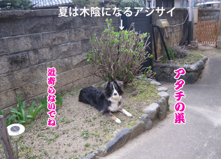 IMG_2964ixy45b.jpg