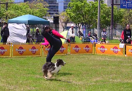 dogdancekiko-005w45.jpg